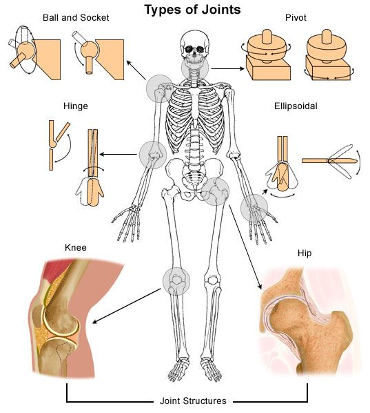 Types of joints in the human body - human body for kids