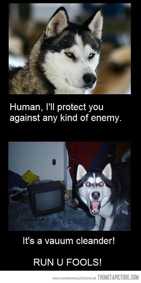 my dogs!!! lol
