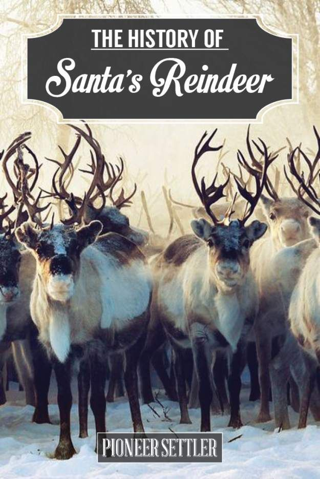 Christmas Reindeer: Everything You Need To Know About The History of Santa's Reindeer   Fun Facts About Holiday by Pioneer Settler at http://pioneersettler.com/santas-reindeer-everything-need-know-history-christmas-reindeer/