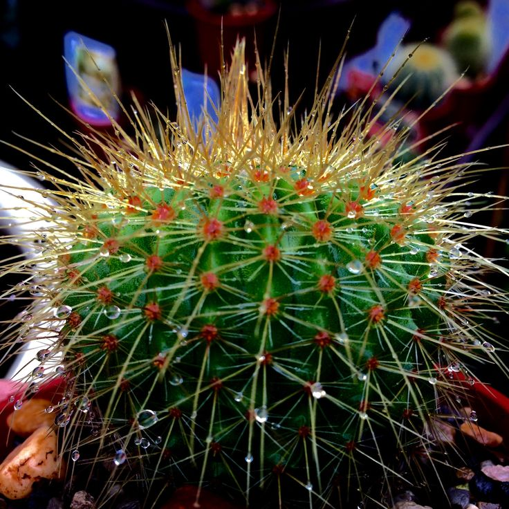 For all of the cactus lovers, we have plenty in stock !