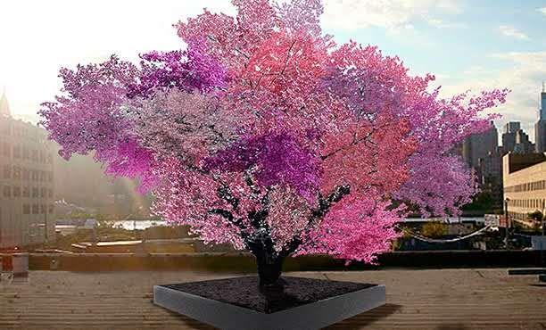 Sam Van Aken's Tree of 40 Fruit