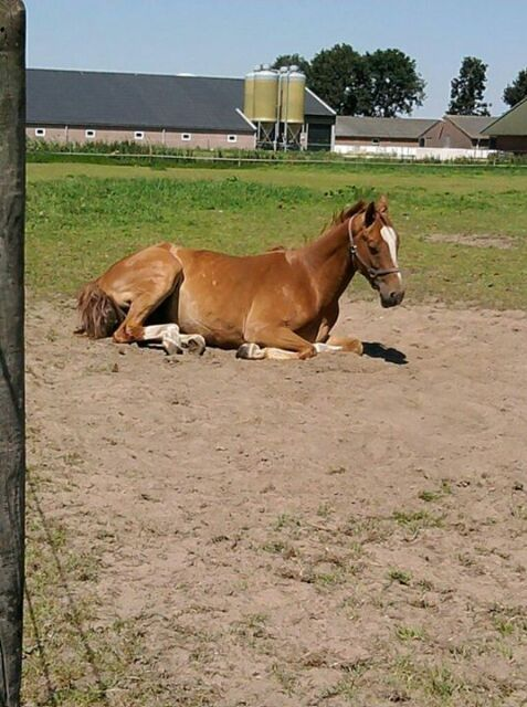 Ik heb op dit lieve paardje gereden, miss and love you Cold Play <3