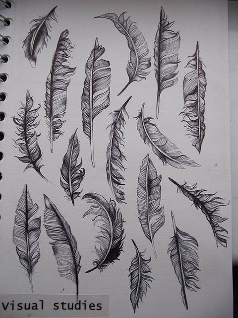 Feather drawings.