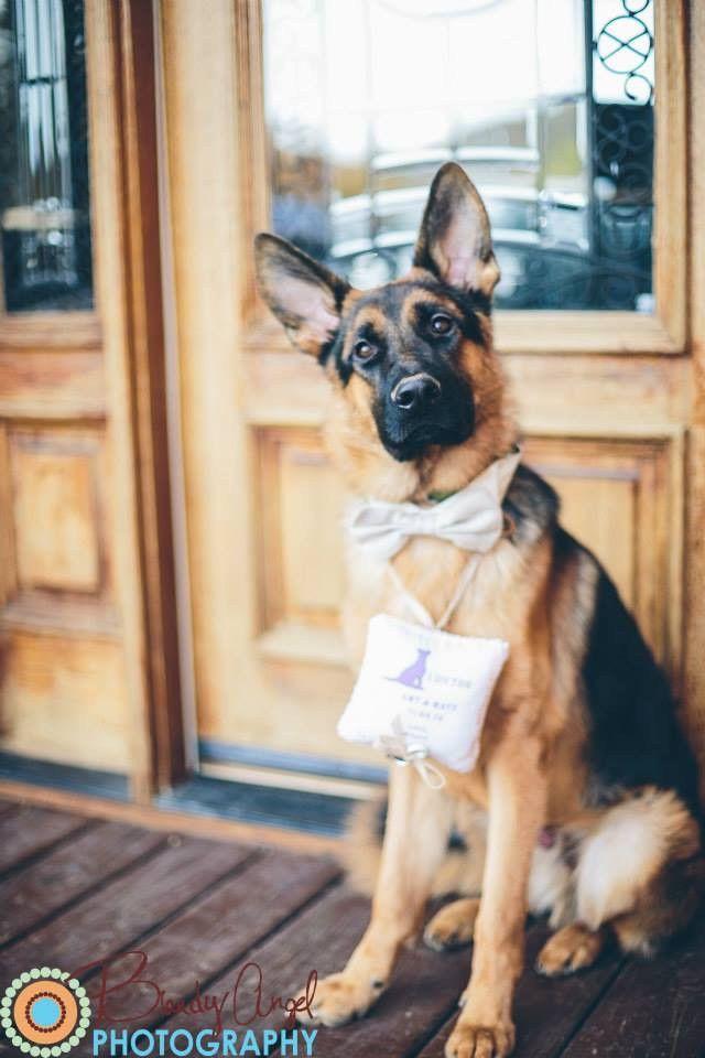 Best 25 Dog ring bearers ideas on Pinterest Dog wedding