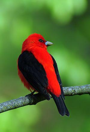 Early Morning Bird Talk Before Black Coffee Cream. I Love Birds.