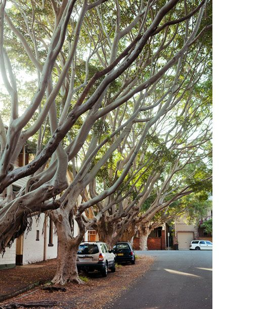 Leafy streets in Cooks Hill by Sean Fennessy - thedesignfiles.net