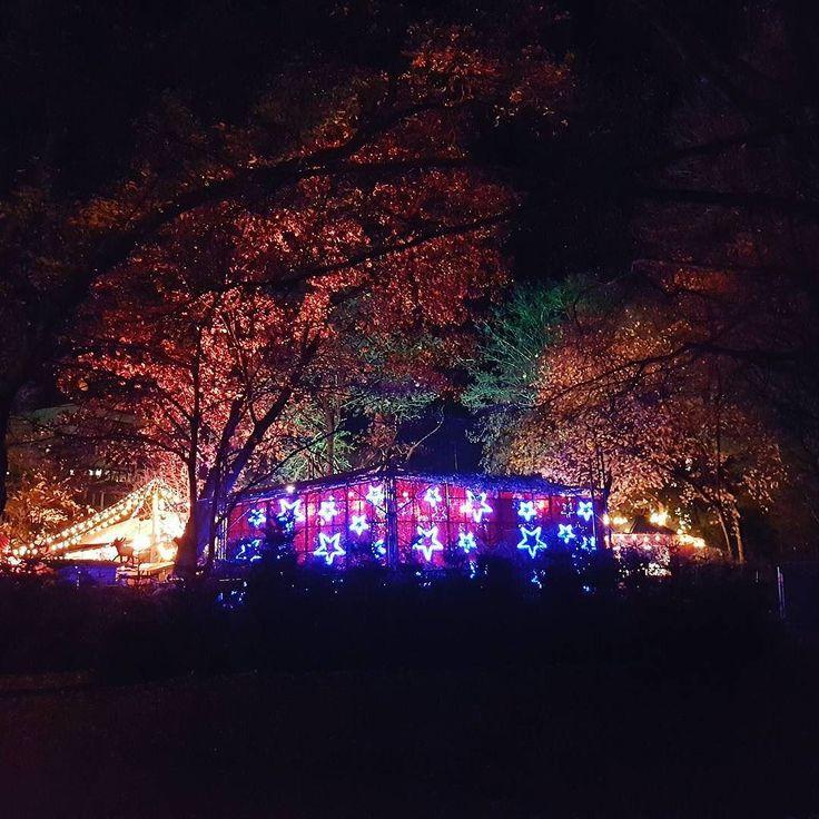 Shining Stars #ChristmasMarket #Park #Cologne #Stars #Trees #Multicolors #Stadtgarten #Weihnachtsmarkt #Köln