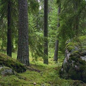 Härlig mulleskog