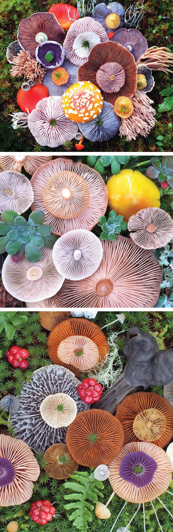 Vibrant Mushroom Arrangements Photographed by Jill Bliss