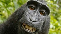 Cevallos: When a monkey takes a selfie ...