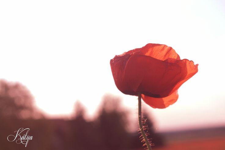 vintage poppy