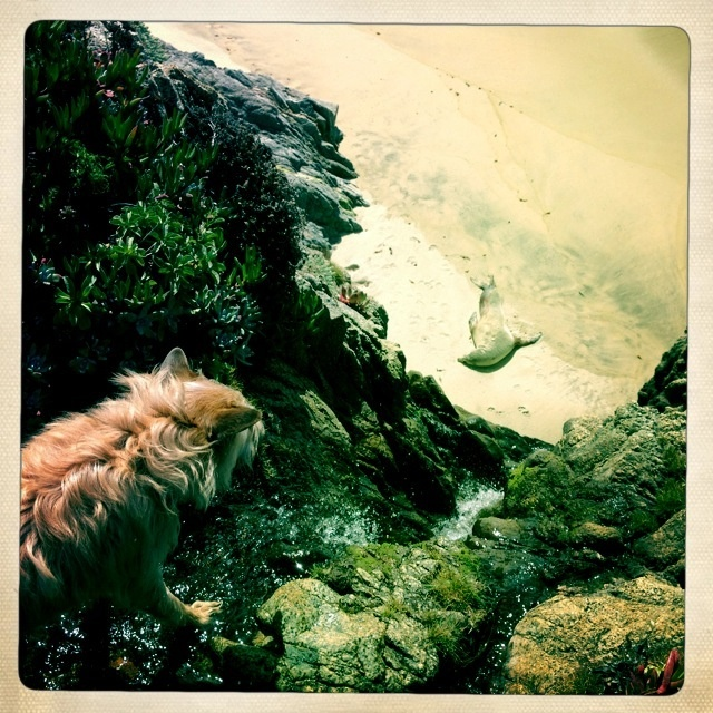 Samui finds a dead seal in Big Sur at the beach