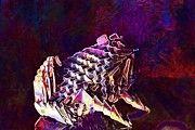 "New artwork for sale! - "" Origami Paper Figures Forms Frog  by PixBreak Art "" - http://ift.tt/2v0RnNR"