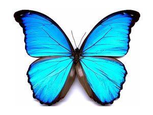 mariposas para dibujar a lapiz - Buscar con Google
