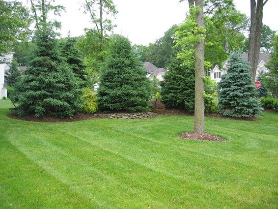 Landscaping along fences warren nj softening for Backyard privacy landscaping trees