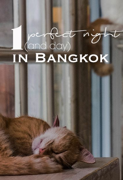 One Night in Bangkok | Thailand | Siam | Cat Cafe | Pad Thai