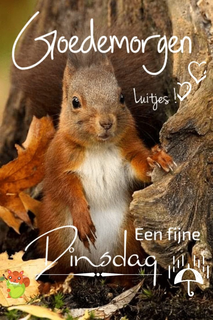 Pin Van Xandra Yvana Op Dinsdag Goedemorgen Fijne Dinsdag Dinsdag