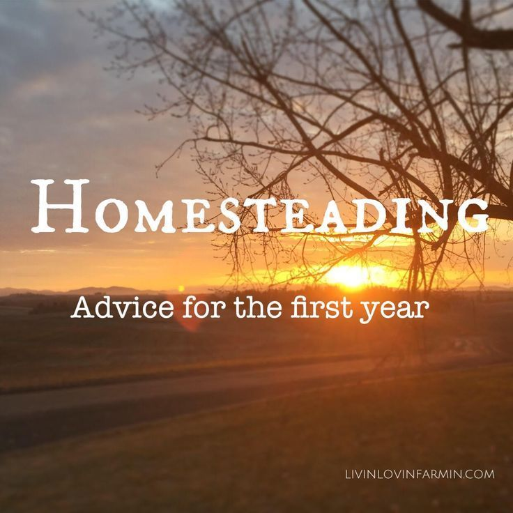 Starting a Homestead: Advice for the first year: