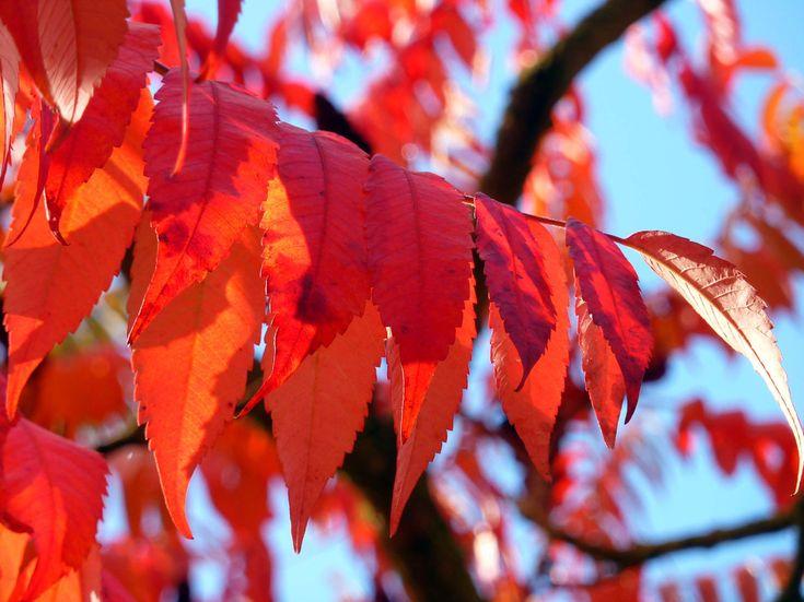 #autumn #autumn colours #autumn forest #autumn leaf #colored #colorful #coloring #emerge #fall color #golden autumn #leaves #mirroring #park #sun #yellow