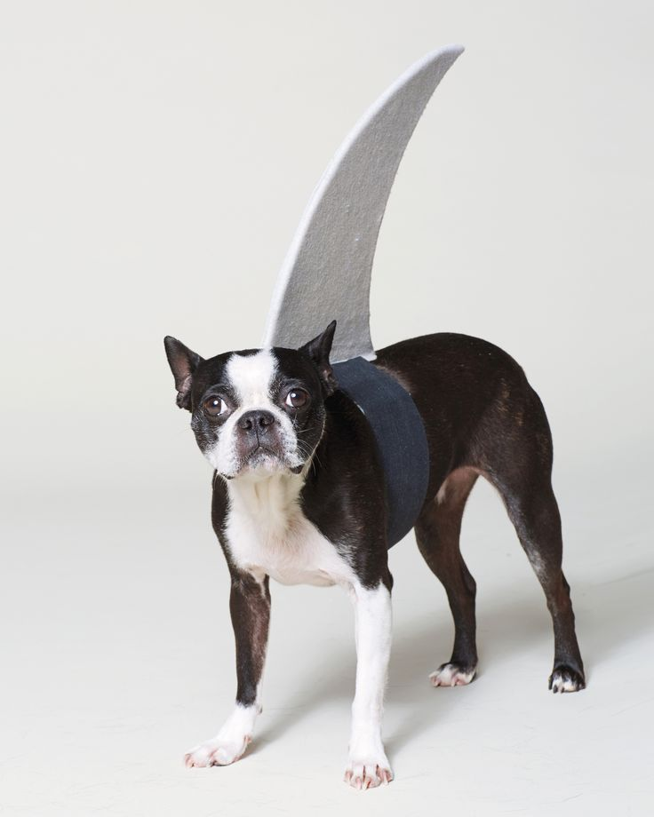 Scale the templates up or down depending on the size of your dog; the same goes for the length of the elastic that secures the fin around the belly. Choose elastic in a shade that best matches your dog's coat.
