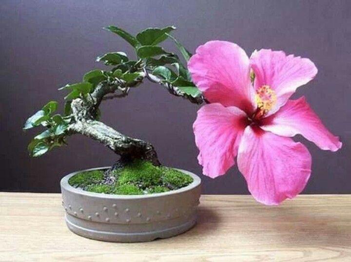 64 best Miniature Flower Arrangements images on Pinterest