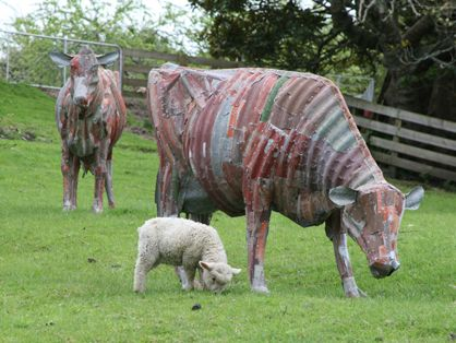 Corrugated Iron cows by Jeff Thompson, NZ