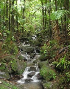 How to Tour the Blue Mountains of Jamaica