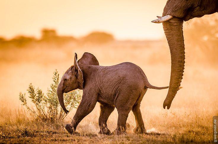 http://gwegner.de/blog/afrika-hautnah-unsere-botswana-reise/
