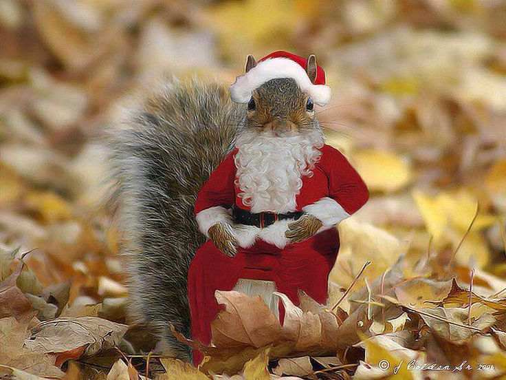 Image result for red squirrel in santa hat images