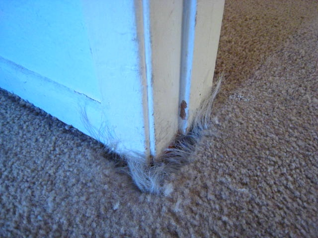 how to stop your cat from scratching carpet