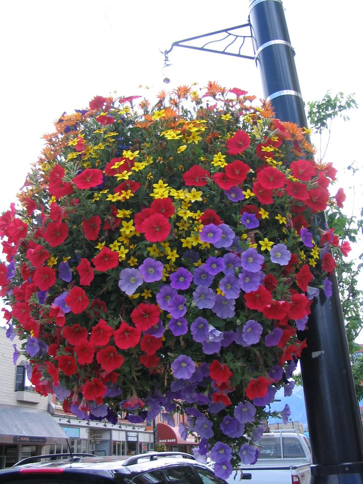 1480 best images about colorful containers on pinterest for Colorful hanging planters