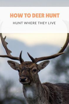 How to Deer Hunt.You've got to hunt where they live. Here's our advice for finding great hunting ground on public and private land.#hunter #hunting #deerhunting #deer