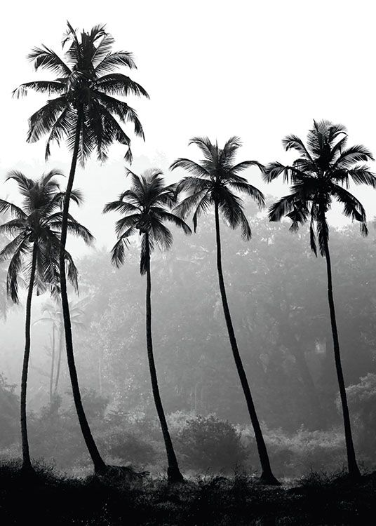 palm trees poster in der gruppe poster schwarz wei bei desenio ab 8379 tropical poster. Black Bedroom Furniture Sets. Home Design Ideas