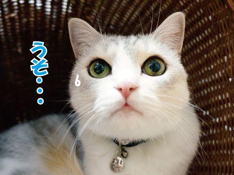 柳に風な猫 |うにオフィシャルブログ「うにの秘密基地」Powered by Ameba