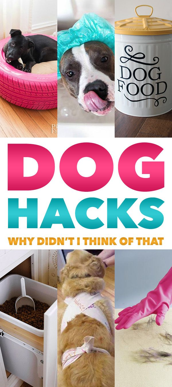 Dog Hacks that YOU and YOUR PUP will love!  Very practical and very helpful!