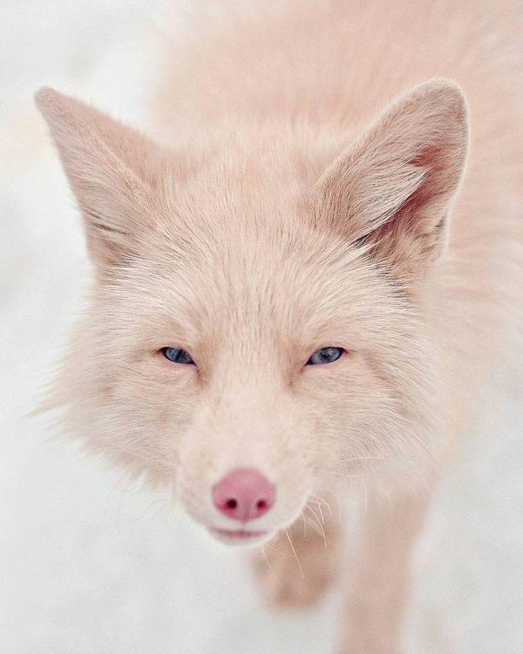 20 seltene Tiere aus aller Welt | CutesyPooh   – WILD ONES
