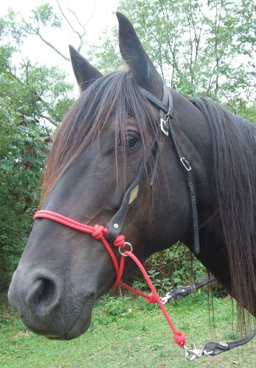 I love these! Horse Rope Bitless Bridle Attachment  Indian Bosal by KnotJustRope, $15.00