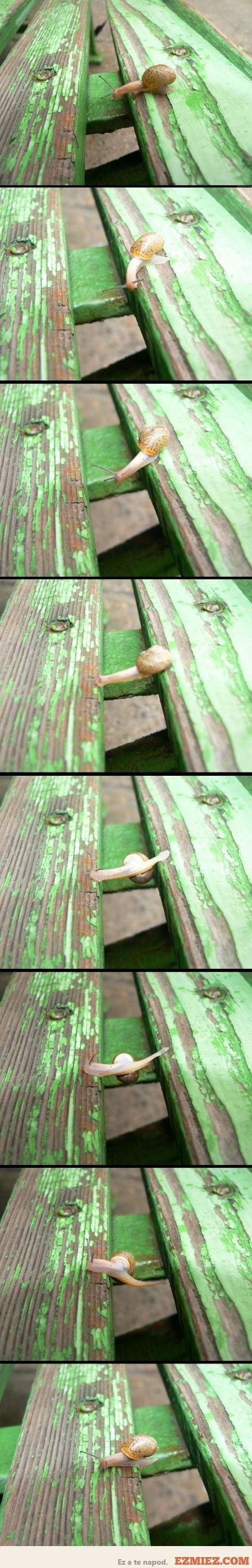 Cool little snail!!