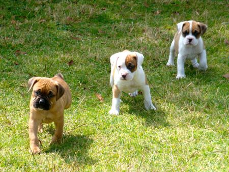 "Are Puppy Kindergarten Classes Necessary? You Be The Judge 	 	 	It's time you make the right decision and enroll your pup into puppy school. Take the following example from a friend of mine, Jim Bonza: 	""Just before my neighbor's 100-pound, 9-month-old chocolate Labrador Retriever was about the be thrown away to the nearest animal shelter for doing what comes natural – jumping up on everyone, running away every chance he could, and barking non-stop at anyone or anything – I was abl..."