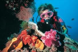 australia scuba diving great barrier reef - Google Search