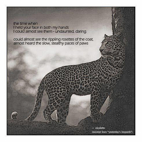 Yesterday's leopards © Nicolette van der Walt