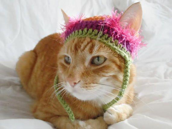Hats for CatsCrochet Cat Hat Novelty Hats For Pets Cat