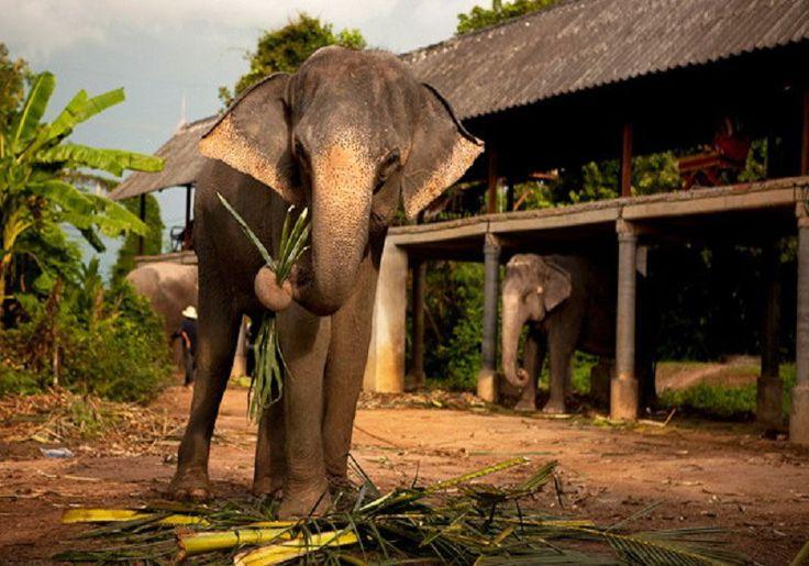 Elephant Village : Pattaya, Thailand