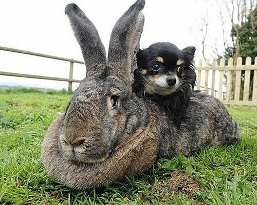 The grass is good, but the rabbit is much softer.