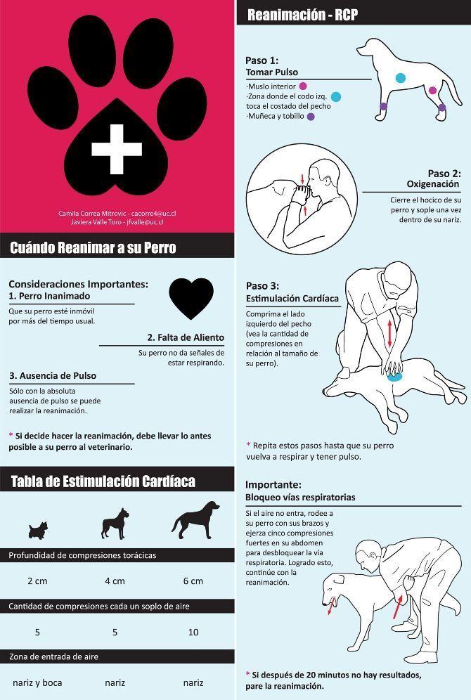 ¡ En caso de emergencia, sálvale la vida a tu perro !
