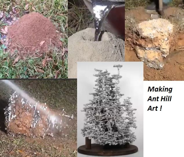 Making Ant Hill Art Sculpture Statue! see video at link: http://www.liveleak.com/view?i=9c4_1386672510
