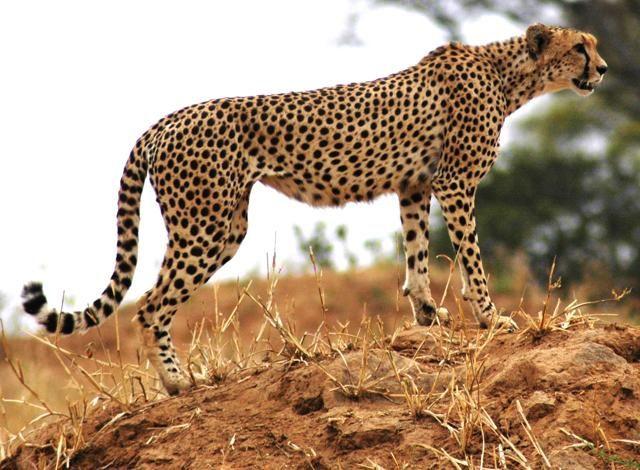 Scelti da Dove: 10 viaggi da fare nella vita Tanzania Sul bordo del vulcano di Ngorongoro, a più di 2.000 metri di altitudine, nei nuovi e campi tendati cinque stelle. Sui laghi nel nord della Tanzania rifugio di centinaia di specie di volatili: dai fenicotteri rosa alle cicogne, dalle gru alle oche egiziane. Con un dritta: i lodge più economici sono i Wildlife. Ex strutture statali, privatizzate e ristrutturate, che si trovano nei parchi, in posizioni spettacolari.