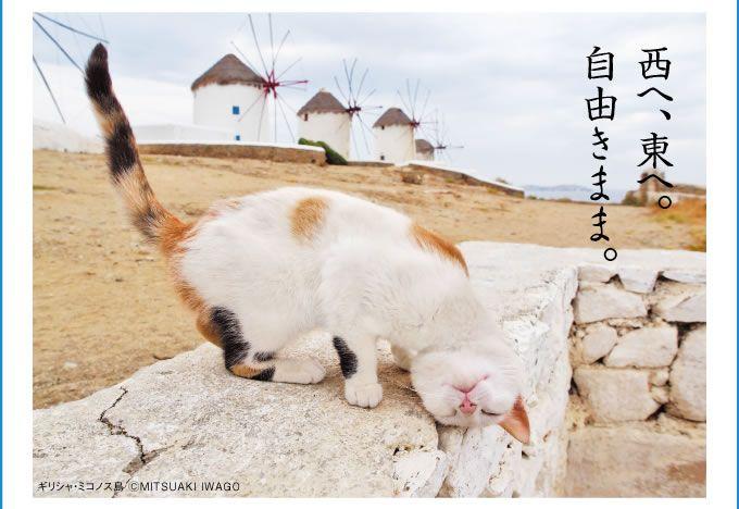 岩合光昭 写真展 「ねこ歩き」:名古屋三越栄店 2015年1月14日(水)~ 1月19日(月)