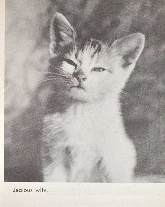 Funny 1950's Vintage Book Page- Hilarious Zoo Animal Print with Clever Captions- The Jealous Wife. $3.50, via Etsy.