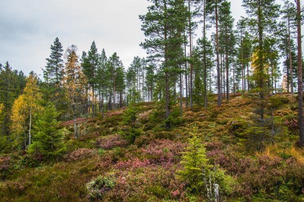 En fin liten skogstur.